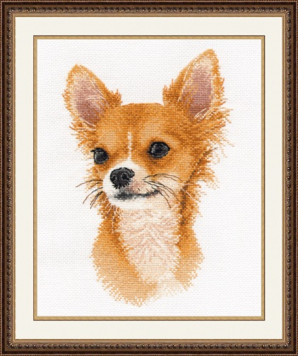 Little Friend Chihuahua